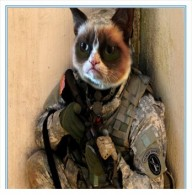 Military_working_cat_program_underway_at__The_Old_Guard_